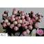 product/img.ozexport.nl/LPOJSARB55-LIVE_fotos-0x6129C5B0F30D6BE37233BF174455DAA6CFF8292F.jpg