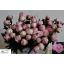 product/img.ozexport.nl/LPOJSARB55-LIVE_fotos-0xB6640D60998746C369C863280223D7AAB25B640D.jpg