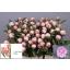 product/img.ozexport.nl/LPOJSARB55-LIVE_fotos-0xBD0490E7A9EB45CC425E3A2FB9C8716738DF2D89.jpg