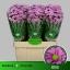 product/img.ozexport.nl/LSANKRI-LIVE_fotos-0xC431689B4DE405F2C3260051669806CAFB7FD75D.jpg