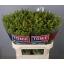 product/img.ozexport.nl/LSOL7-LIVE_fotos-0x728C6BA617E5F30C6AA9F6F347F7BDF4826AA98B.jpg