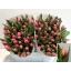 product/img.ozexport.nl/LTULCOL-LIVE_fotos-0x18CC638941B08EB18770B8BB5A213332B980865E.jpg