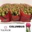 product/img.ozexport.nl/LTULCOL-LIVE_fotos-0xC43681134DF416087608FEF1F4E30418B16AB547.jpg