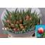 product/img.ozexport.nl/LTULCOL-LIVE_fotos-0xDE8DBB8F8F098F8B9C652B62683E6F9C2FE021A4.jpg