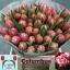 product/img.ozexport.nl/LTULCOL-LIVE_fotos-0xE4DA41D70194459757F1D1772E1D18C6AC27A1C2.jpg