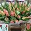 product/img.ozexport.nl/LTULPASS-LIVE_fotos-0xCC85824393DAF5571C0A8541A82DF4B46EB9ABF8.jpg