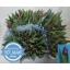 product/img.ozexport.nl/LTULPURP-LIVE_fotos-0x0DBDE74BCBD5ADDFB3EC1CB6D8D78319DE815D27.jpg
