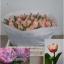product/img.ozexport.nl/LTULQUE-LIVE_fotos-0x338FACB1ED6EC8EC0EB49EF0C28E3380D17726E8.jpg
