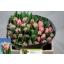 product/img.ozexport.nl/LTULQUE-LIVE_fotos-0x51B740E3490EC682C764F5C0104D870B75C454C4.jpg