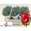 product/img.ozexport.nl/LTULROC-LIVE_fotos-0x594CEBF84604F51141D802AAB6845E2E88C8CB41.jpg