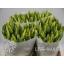 product/img.ozexport.nl/LTULSTRG-ASSORTI_fotos-MVA-Kaagman - Tulp en stronggold.jpg