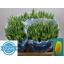 product/img.ozexport.nl/LTULSTRG-LIVE_fotos-0xE697CDB859588000FBC9059ED035CF2721C1B037.jpg