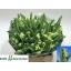product/img.ozexport.nl/LTULSUPP-LIVE_fotos-0x6CA70E16C5C52FF1F1279561C45C0EF7A938D1F9.jpg