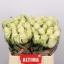 product/img.ozexport.nl/RATH4-LIVE_fotos-0x8DED1C4DB17ADA11645EAAF8A0115036CF680CBC.jpg