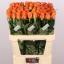 product/img.ozexport.nl/RCON8-LIVE_fotos-0x87F886AF22582B91E0FB207F935431D75E0672F6.jpg