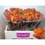 product/img.ozexport.nl/RDOW5-LIVE_fotos-0xB89FAD05D5E4E30FFF77969857A8AA08CD81BCA9.jpg