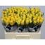 product/img.ozexport.nl/RGOO5-LIVE_fotos-0x70F3DC2888AAF9BAFCE998A000FEED7350996F4C.jpg