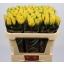 product/img.ozexport.nl/RGOO7-LIVE_fotos-0x029647FFD4372D275C8FE67257B193A5B1E28E5F.jpg