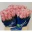 product/img.ozexport.nl/RLAZI4-LIVE_fotos-0x90AF64A873F131B07242FA34CA0AEAE7279C4D30.jpg