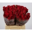 product/img.ozexport.nl/RMAD4-LIVE_fotos-0x1D468382896A0EBE40C2CDC8E4CDC9A5F7F44C22.jpg