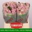 product/img.ozexport.nl/RMEM4-LIVE_fotos-0xA9EB88C04B38513D2F27B4CCB45C67AF0CDD913F.jpg