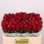 product/img.ozexport.nl/RMOV5-LIVE_fotos-0x38CC72DE6CD370F1BE727B4133136A98FE6FD032.jpg