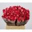 product/img.ozexport.nl/RNIC4-LIVE_fotos-0x596C26FDA6B95E5F62A50ACC6E4A70B3B9F8717A.jpg