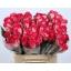 product/img.ozexport.nl/RNIC4-LIVE_fotos-0x73B3A5023AF5D7AF3BF2AD25315049D35DF54992.jpg