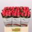 product/img.ozexport.nl/RPIN6-LIVE_fotos-0xC5533C40F2FA7BA3A9CFA626A1FBA93558D33539.jpg