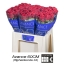 product/img.ozexport.nl/RRED6N-LIVE_fotos-0x09ACC429FD75F32F13132B1EE5DF35CC5D5739F3.jpg