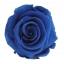 PRZ1630-01-rosa-tallo-standard.jpg