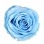 PRZ1640-01-rosa-tallo-standard.jpg