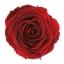 PRZ1800-01-rosa-tallo-standard.jpg