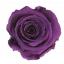 PRZ1840-01-rosa-tallo-standard.jpg