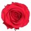 PRZ7200-01-rosa-tallo-premium.jpg