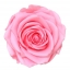 PRZ7420-01-rosa-tallo-premium.jpg