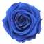 PRZ7630-01-rosa-tallo-premium.jpg