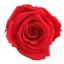 RME3200-01-rosa-medium.jpg