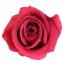 RME3490-01-rosa-medium.jpg