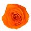 RME3530-01-rosa-medium.jpg
