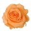 RME3550-01-rosa-medium.jpg