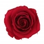 RME3800-01-rosa-medium.jpg