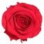 RSG2200-01-rosa-premium.jpg