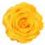 RSG2350-01-rosa-premium.jpg